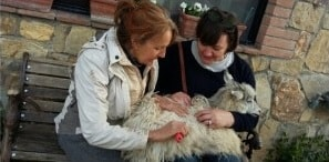 we-will-visit-a-unique-sustainable-cashmere-goats-farm-in-the-hearth-of-chianti-km-zero-tours-slow-travel-tuscany-297x146